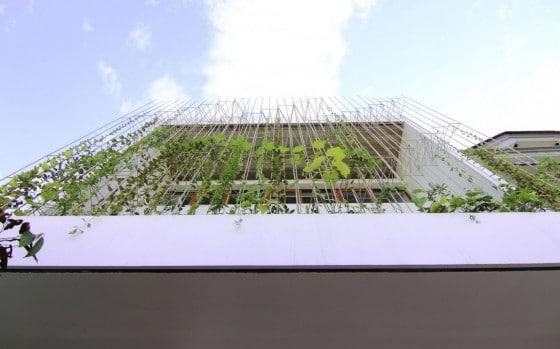 Diseño de fachada cubierta de plantas trepadoras