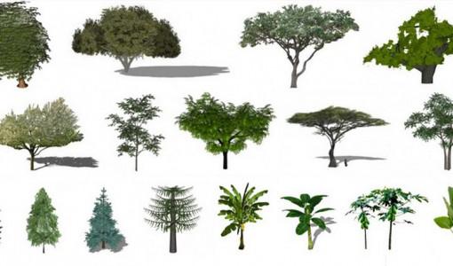 Dise o de exteriores construye hogar - Arboles y plantas de jardin ...