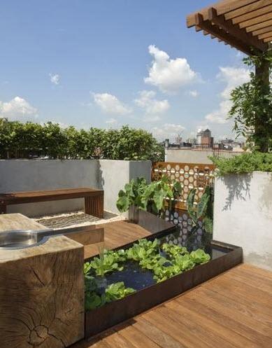Diseño de jardín en el techo con una pileta y plantas acuáticas