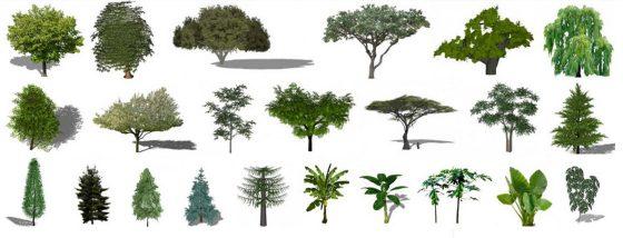 Plantas y árboles 2D y 3D para Sketchup