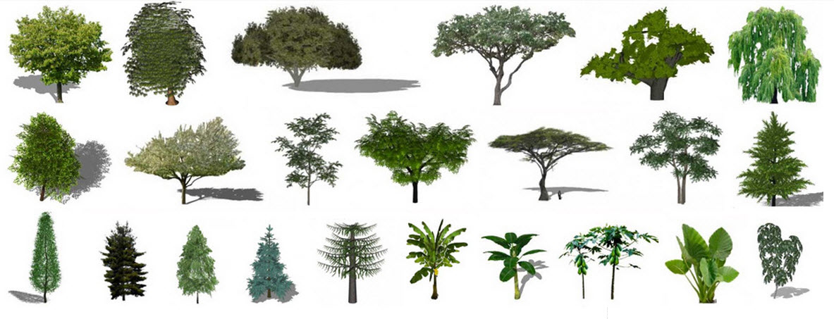 Descargar plantas rboles 2d 3d sketchup construye hogar for Arboles y plantas de jardin