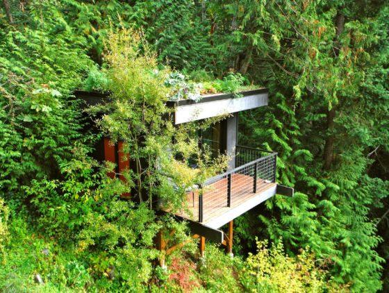 Orman içinde ev