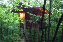 Photo of Diseños de casas del árbol, te sorprenderán las estructuras